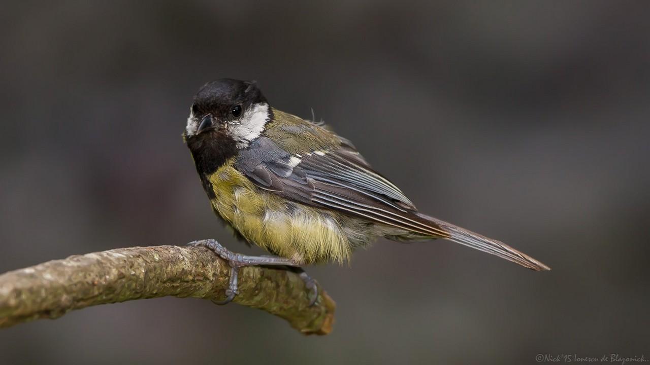 Mostrar Mensajes - nibbiBIRDS-3620