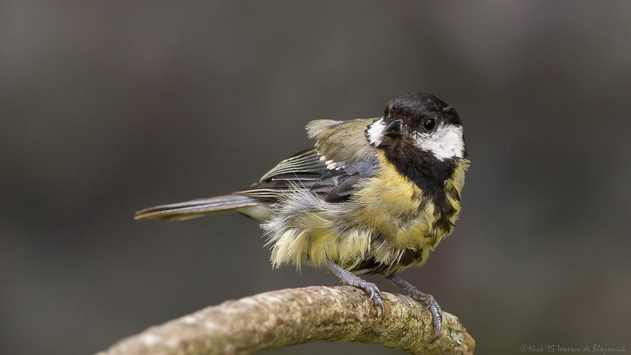 Mostrar Mensajes - nibbiBIRDS-3640