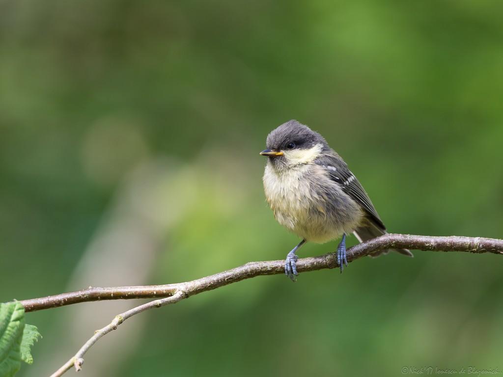 Mostrar Mensajes - nibbibirds-0