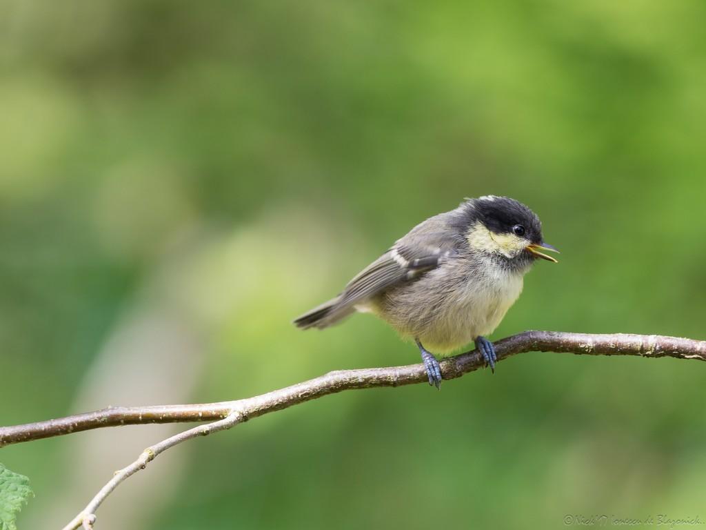 Mostrar Mensajes - nibbibirds-1