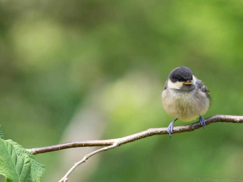 Mostrar Mensajes - nibbibirds-2