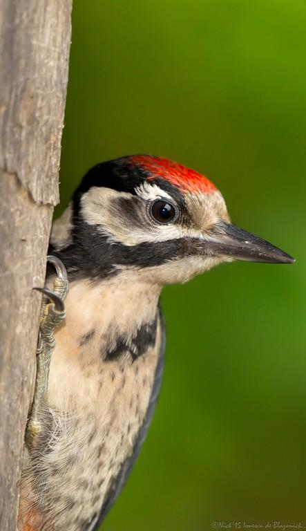 Mostrar Mensajes - nibbiBIRDS-3378