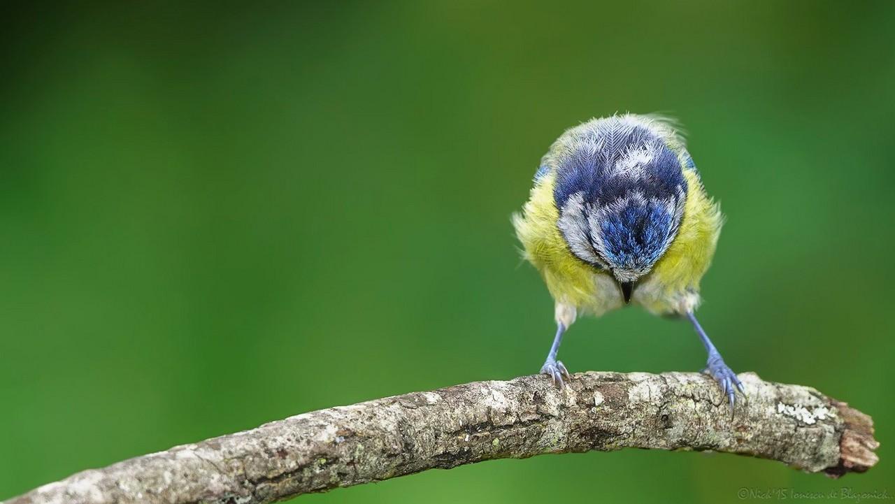 Mostrar Mensajes - nibbiBIRDS-3623
