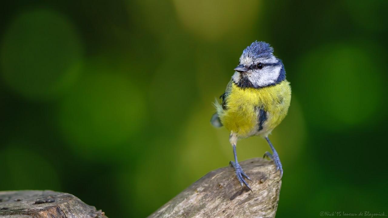 Mostrar Mensajes - nibbiBIRDS-3674