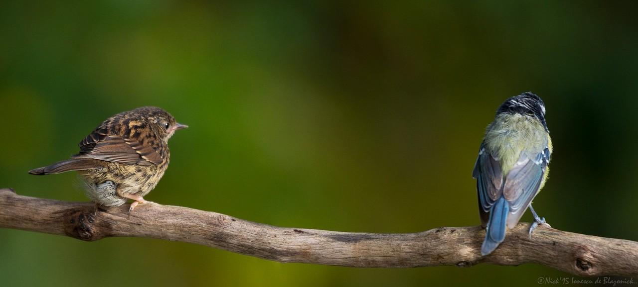 Mostrar Mensajes - nibbiBIRDS-3685