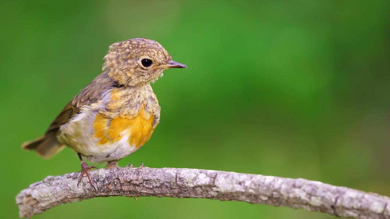 Mostrar Mensajes - nibbiBIRDS-3769