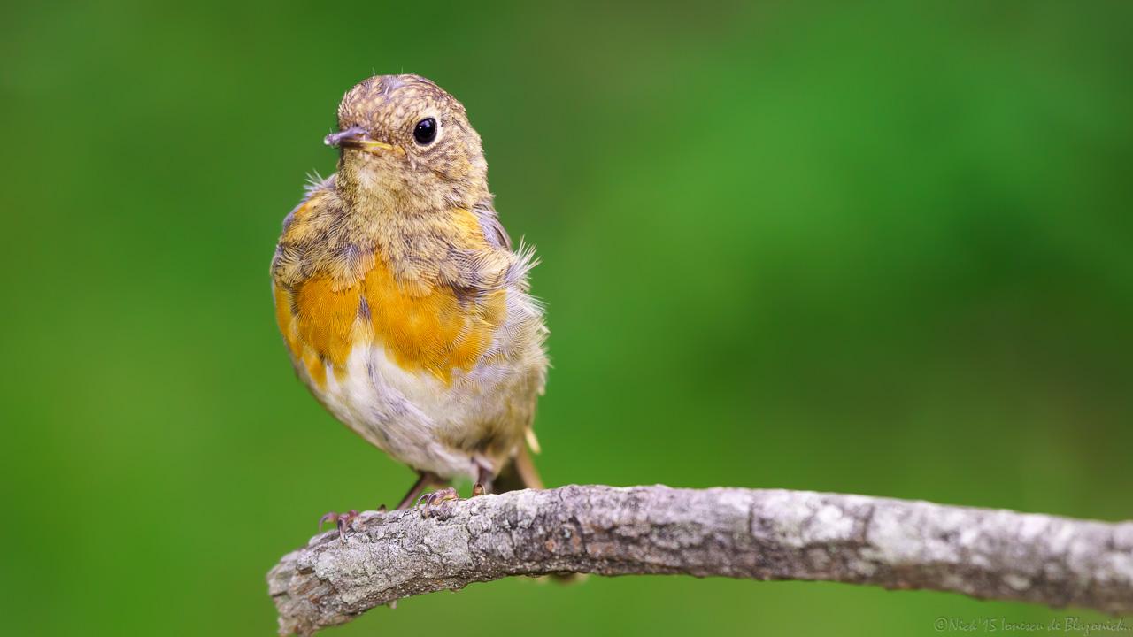 Mostrar Mensajes - nibbiBIRDS-3770