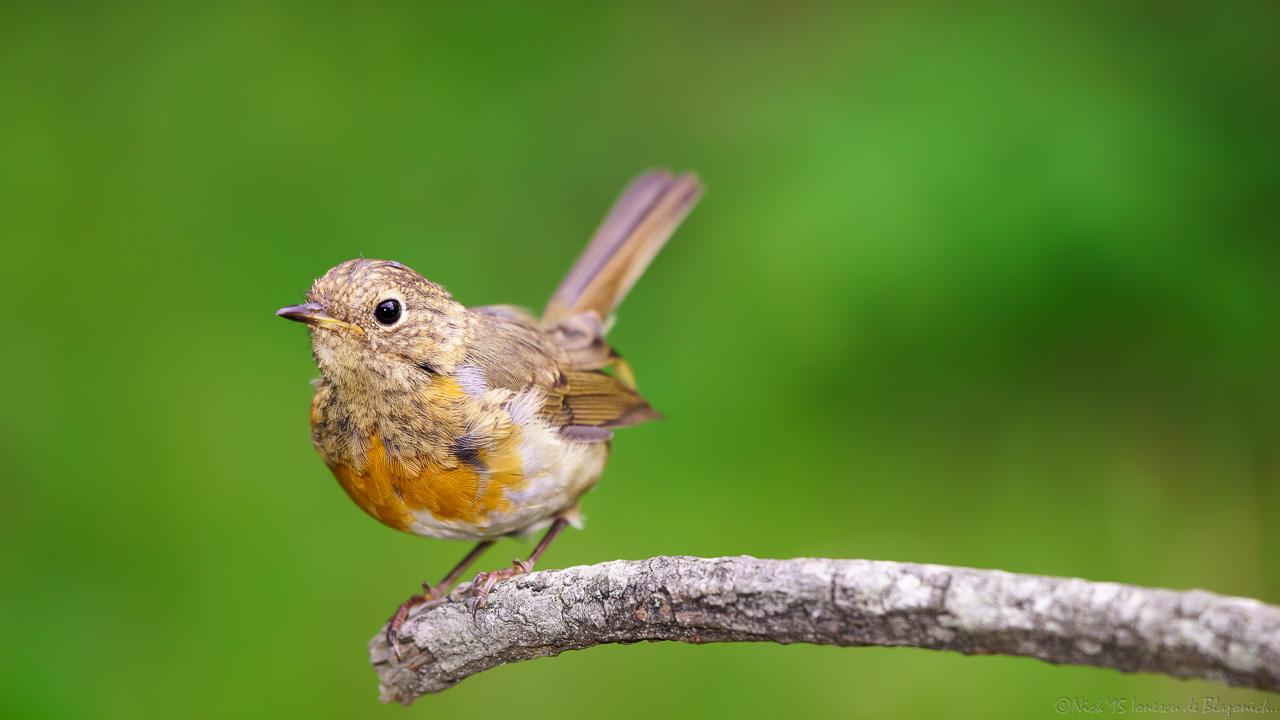 Mostrar Mensajes - nibbiBIRDS-3774