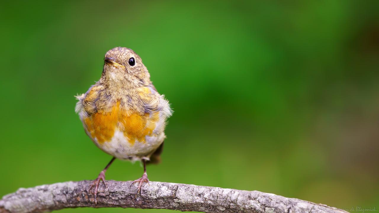 Mostrar Mensajes - nibbiBIRDS-3775