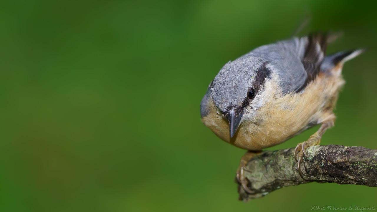 Mostrar Mensajes - nibbiBIRDS-3795
