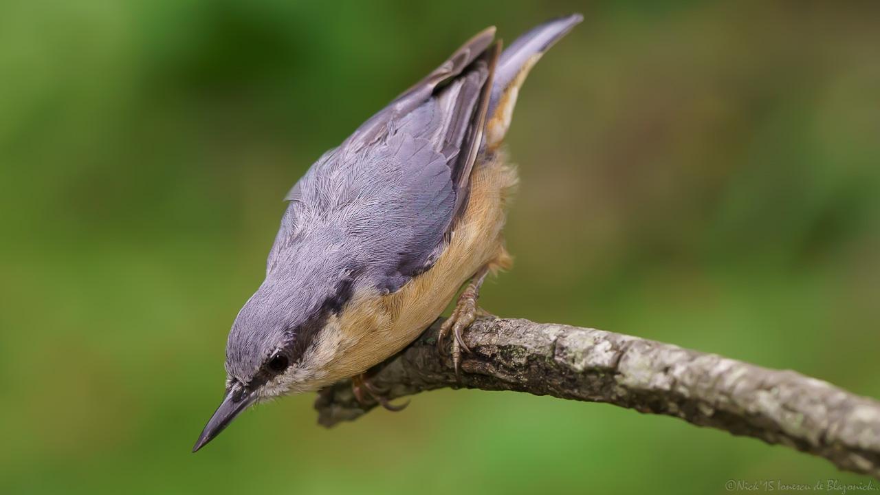 Mostrar Mensajes - nibbiBIRDS-3800