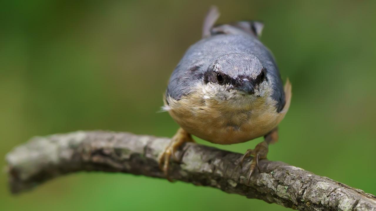 Mostrar Mensajes - nibbiBIRDS-3801