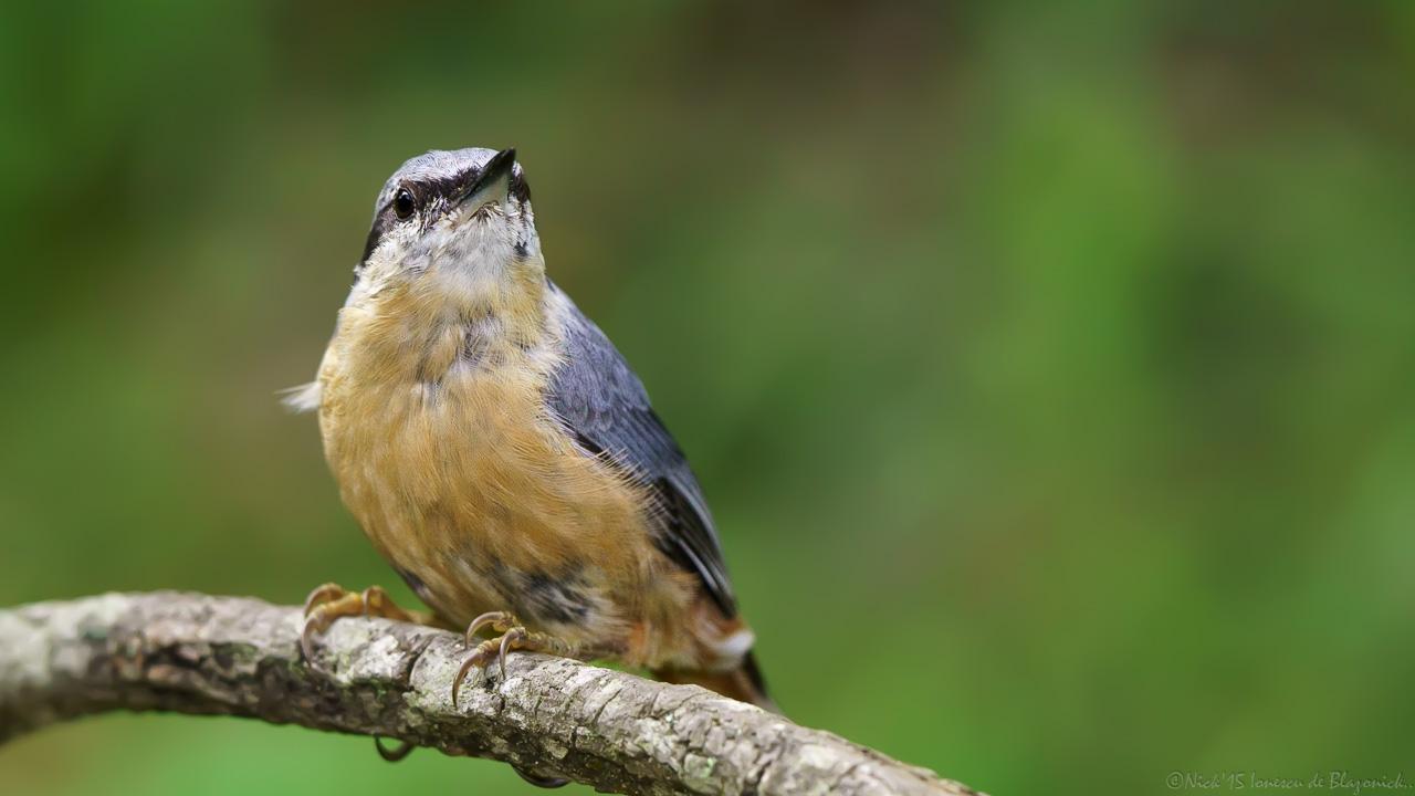 Mostrar Mensajes - nibbiBIRDS-3806