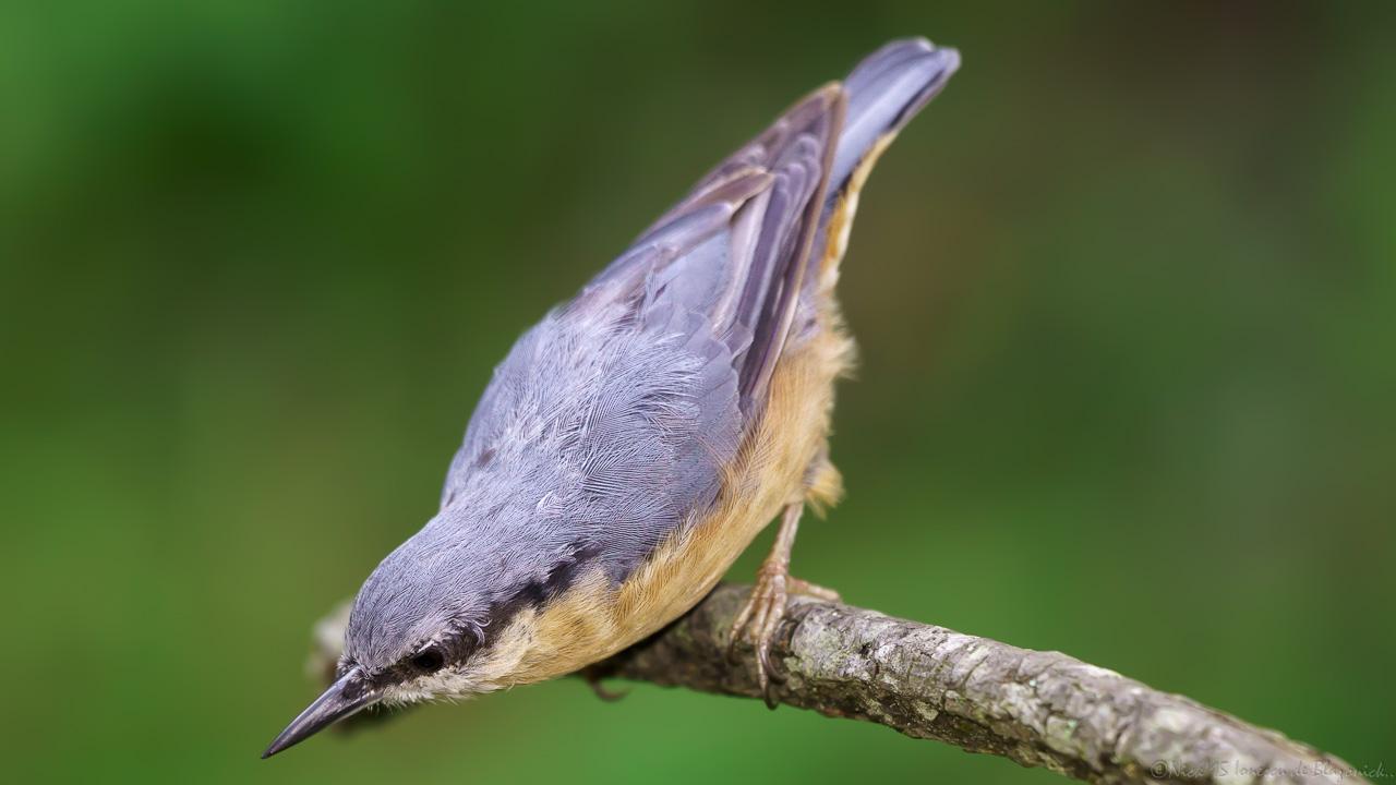 Mostrar Mensajes - nibbiBIRDS-3811