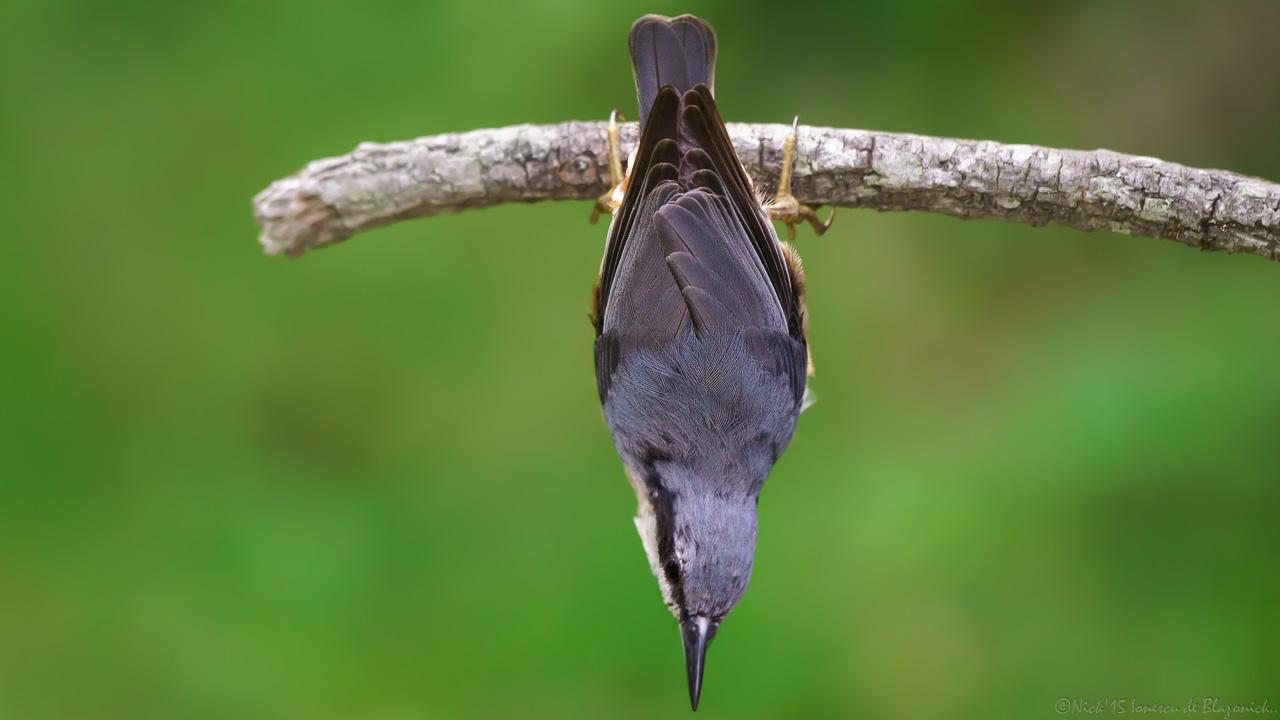 Mostrar Mensajes - nibbiBIRDS-3813