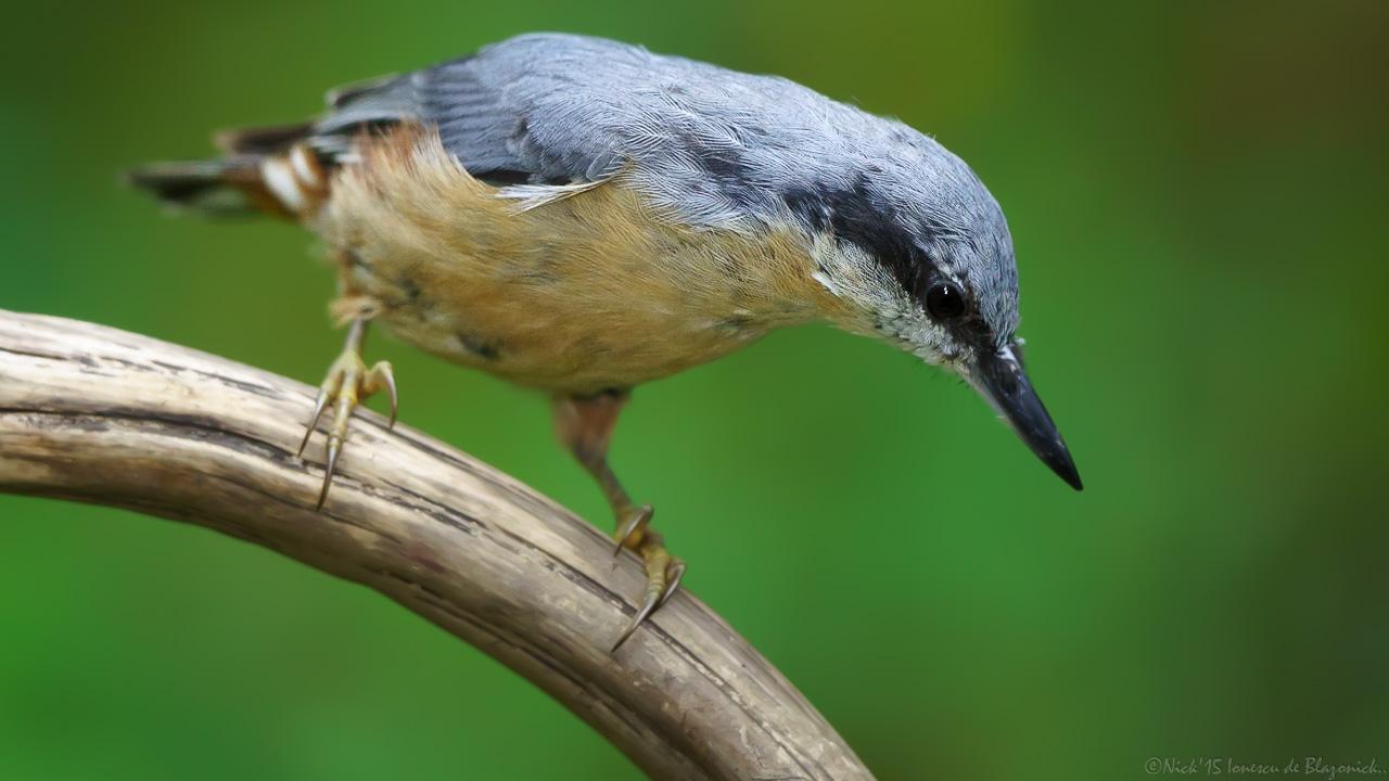 Mostrar Mensajes - nibbiBIRDS-3815