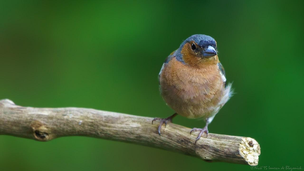 Mostrar Mensajes - nibbiBIRDS-3821