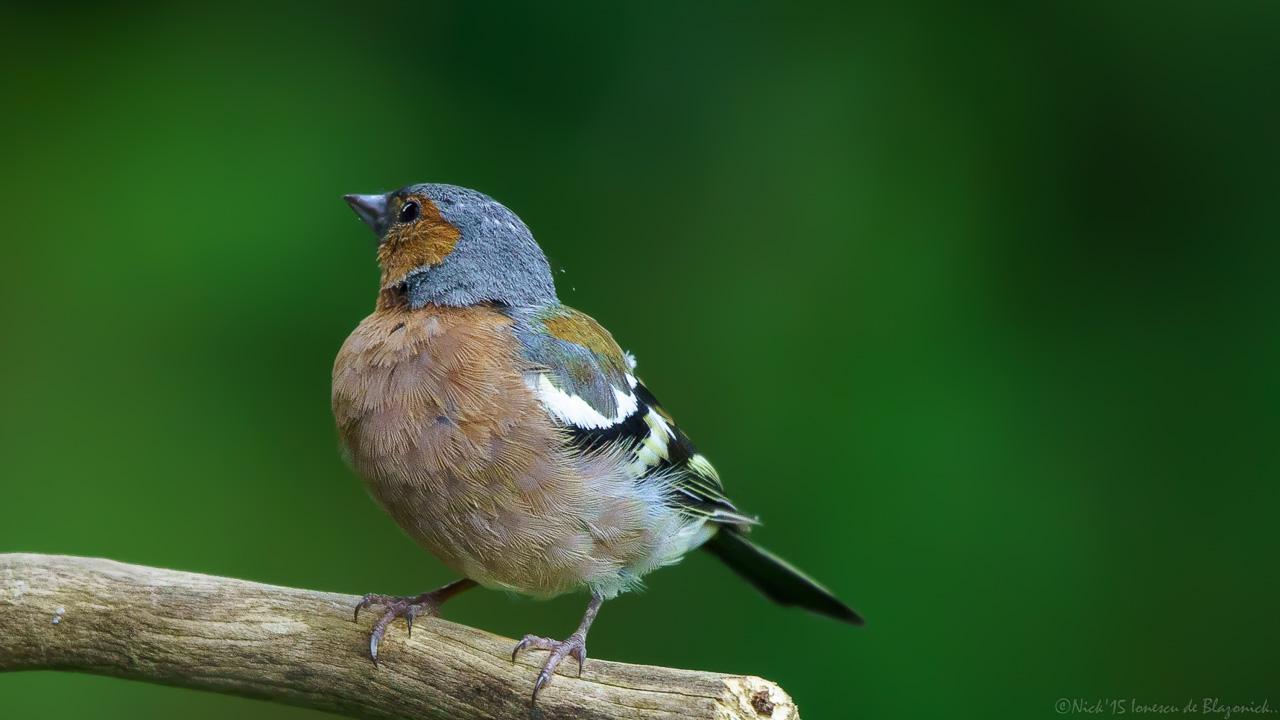 Mostrar Mensajes - nibbiBIRDS-3822