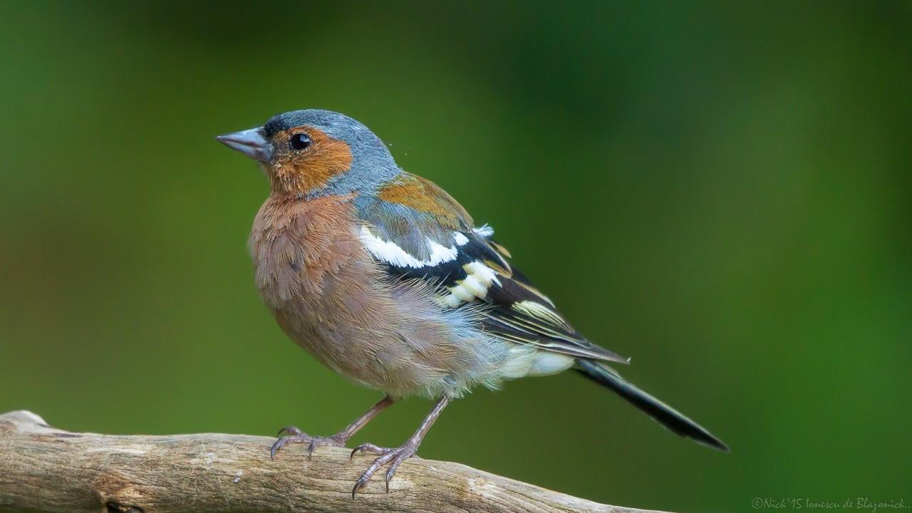Mostrar Mensajes - nibbiBIRDS-3823