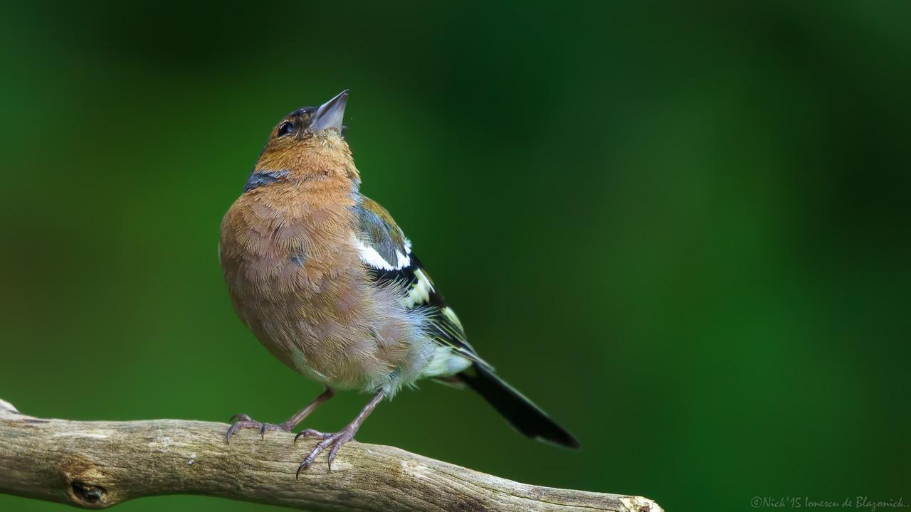 Mostrar Mensajes - nibbiBIRDS-3824