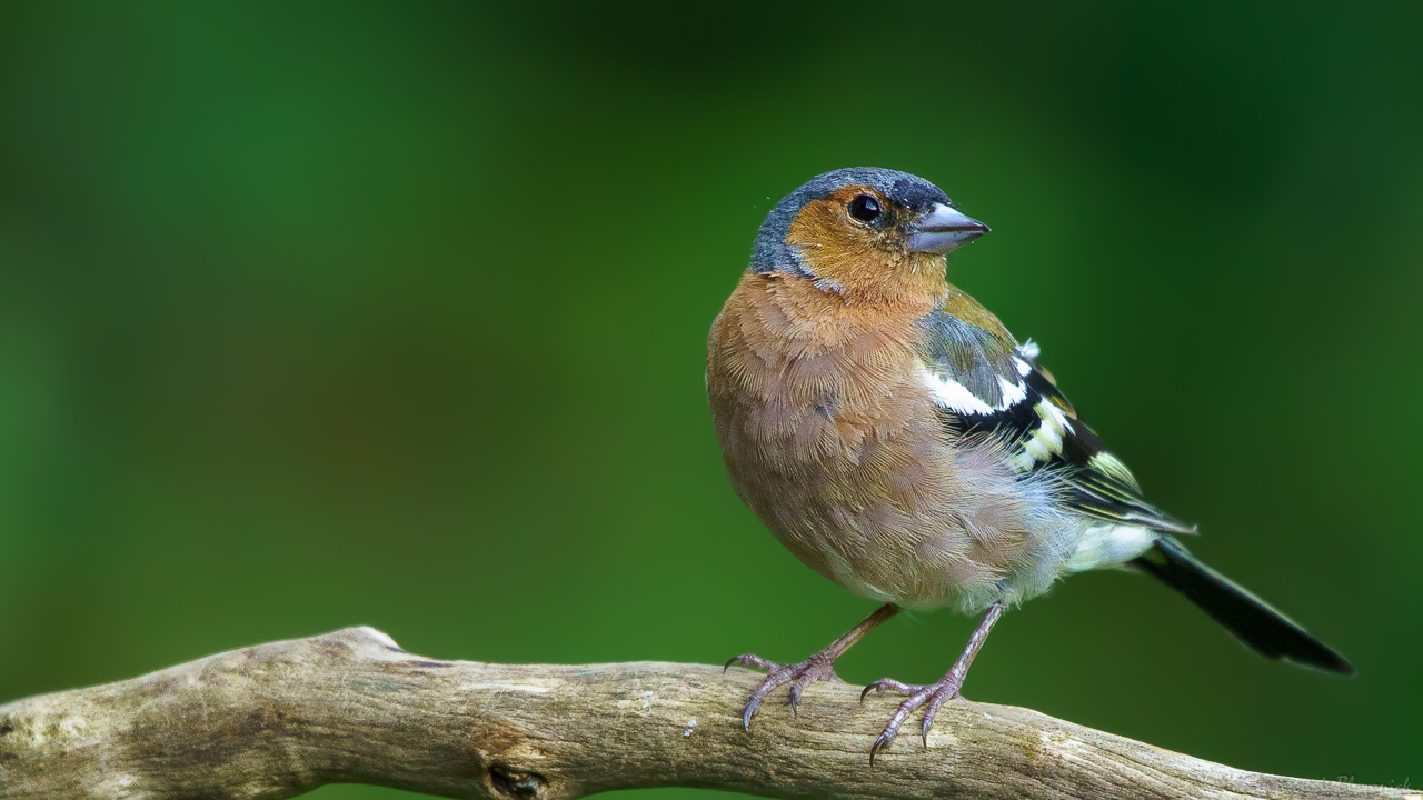 Mostrar Mensajes - nibbiBIRDS-3826