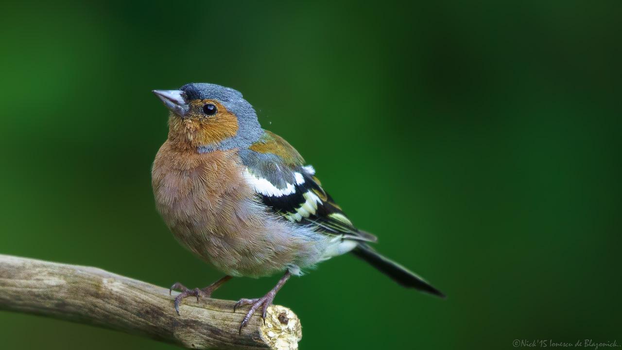 Mostrar Mensajes - nibbiBIRDS-3835