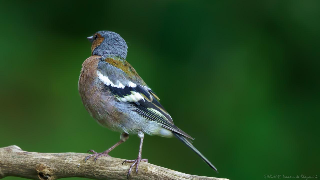 Mostrar Mensajes - nibbiBIRDS-3840