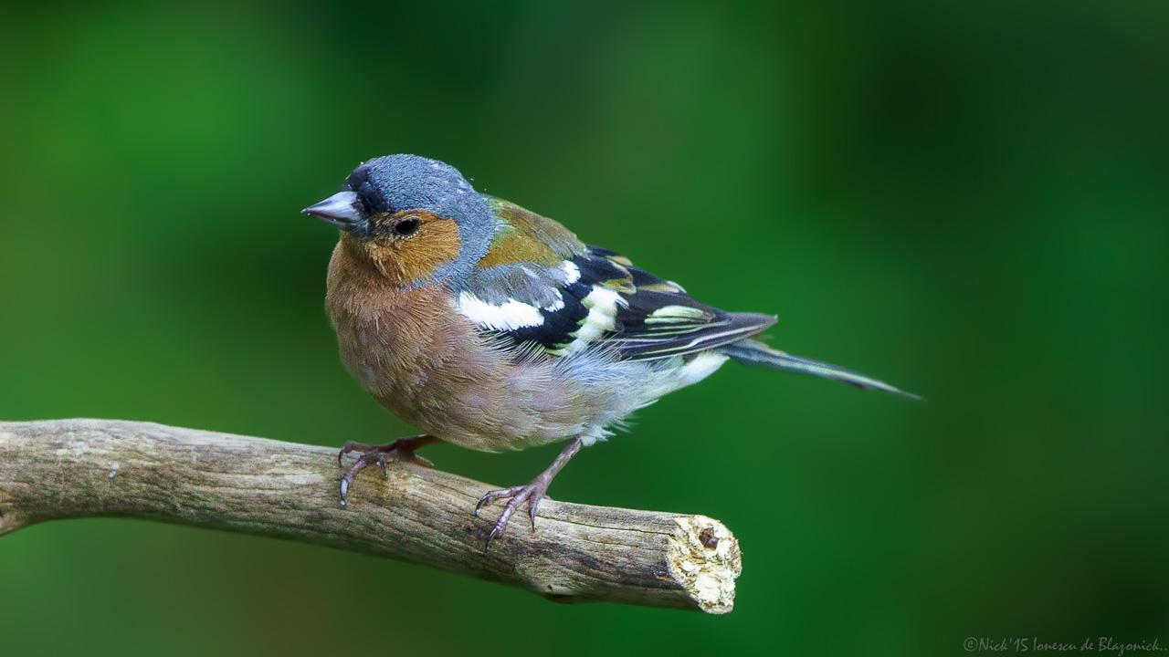 Mostrar Mensajes - nibbiBIRDS-3843