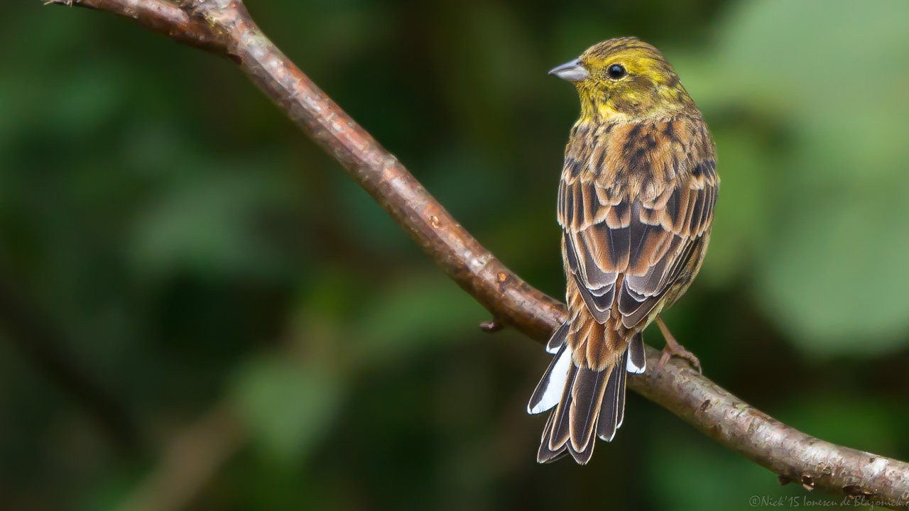 Mostrar Mensajes - nibbiBIRDS-3992