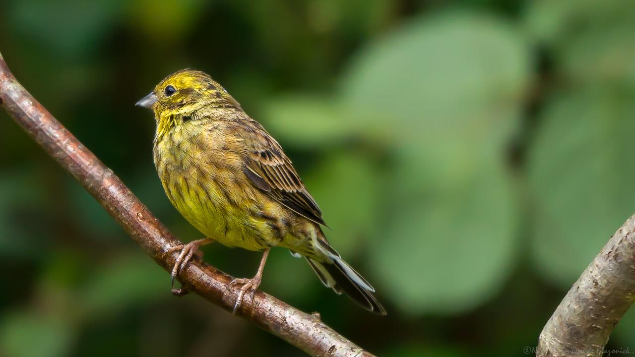 Mostrar Mensajes - nibbiBIRDS-3995