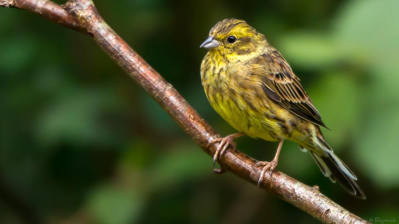 Mostrar Mensajes - nibbiBIRDS-3997