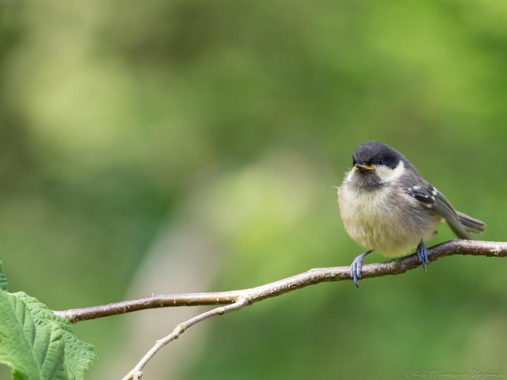 Mostrar Mensajes - nibbibirds-4