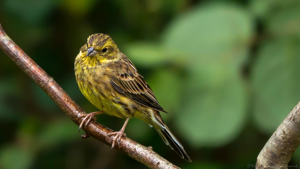 Mostrar Mensajes - nibbiBIRDS-4000