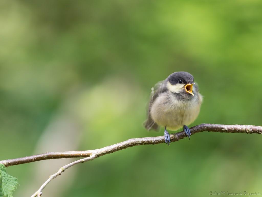 Mostrar Mensajes - nibbibirds-5