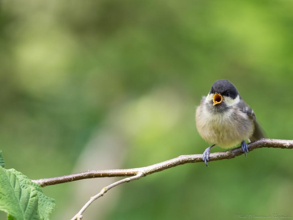 Mostrar Mensajes - nibbibirds-6