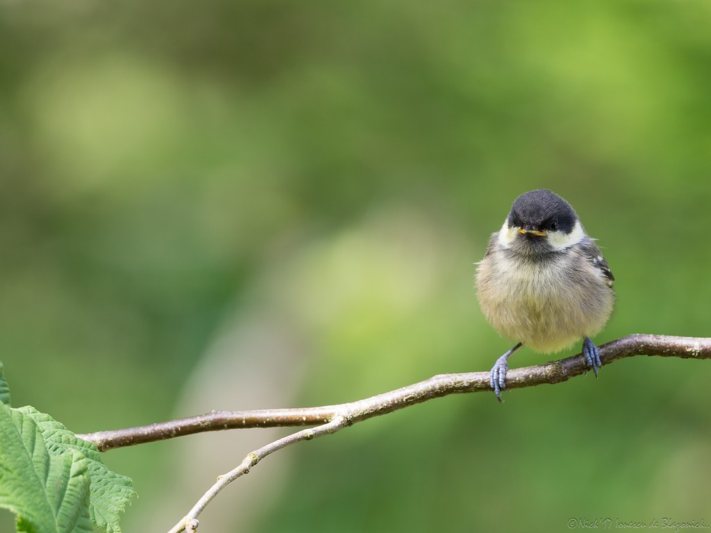 Mostrar Mensajes - nibbibirds-7